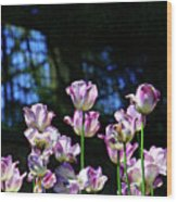 Purple And White Tulips - Photopainting Wood Print