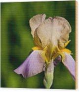 Purple And Yellow Iris Wood Print