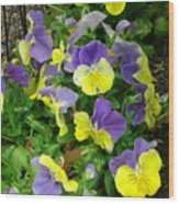 Purple And Yellow Pansies Wood Print