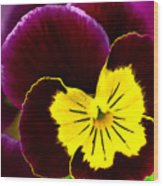 Purple And Yellow Pansy Wood Print