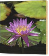 Purple And Yellow Water Lily Wood Print