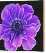 Purple Anemone Flower Wood Print