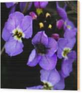 Purple Arctic Wild Flowers Wood Print