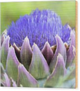Purple Artichoke Flower  Wood Print