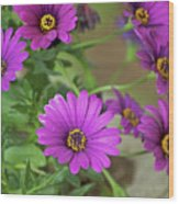 Purple Aster Flowers Wood Print