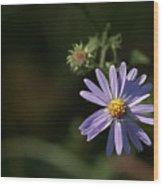 Purple Aster Wood Print