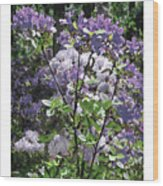 Purple Azaelas Wood Print