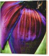 Purple Banana Pod Wood Print