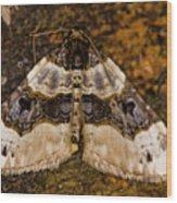 Purple Bar Cosmorhoe Ocellata Wood Print