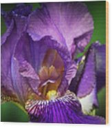Purple Beauty Wood Print
