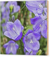 Purple Bell Flowers Wood Print