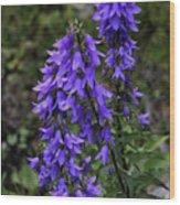 Purple Bell Flowers Wood Print