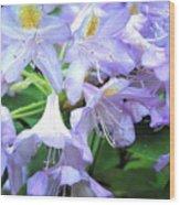Purple Bells Of Spain Wood Print