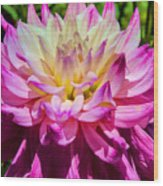 Purple Bloom Wood Print
