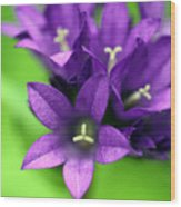 Purple Blooms Wood Print