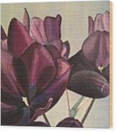 Purple Blooms Cmd1008 Wood Print