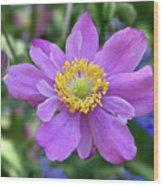 Purple Blossom 1 Wood Print