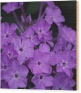 Purple Blossoms Wood Print