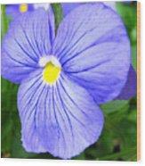 Purple Blue Pansey Wood Print