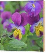 Purple Blue Yellow Wood Print