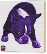 Purple Boston Terrier Art - 8384 - Wb Wood Print