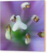 Purple Botanical Wood Print by Frank Tschakert