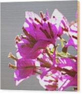 Purple Bougainvillea Flower Wood Print