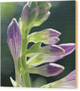 Purple Buds Wood Print