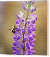 Purple Buzz Wood Print