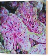 Purple Caladium Wood Print