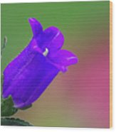 Purple Canterbury Bell Wood Print