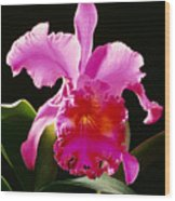 Purple Cattleya Wood Print