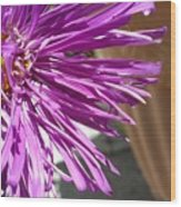 Purple Chinese Aster Wood Print