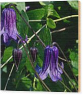 Purple Clamatis Bells Wood Print