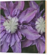 Purple Clematis 2 Wood Print