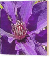 Purple Clematis IIi Wood Print