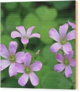 Purple Clover Wood Print