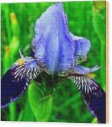 Purple Coated Iris Wood Print