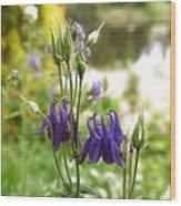 Purple Columbines Wood Print