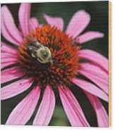 Purple Cone Flower 3 Wood Print