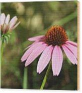 Purple Cone Flower Wood Print