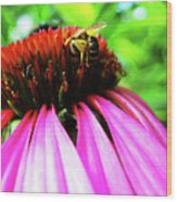 Purple Cone Flower Wood Print by Maria Massimiano