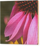 Purple Coneflower Close-up Wood Print