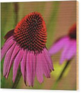Purple Coneflower Wood Print
