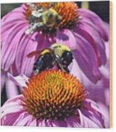 Purple Coneflower Wood Print