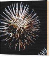 Purple Coneflower Seed Head Wood Print
