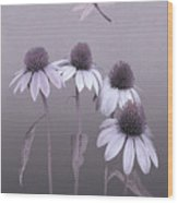 Purple Coneflowers And Dragonfly Wood Print