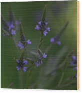 Purple Cones Wood Print