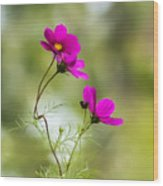 Purple Cosmos Flowers Square Wood Print