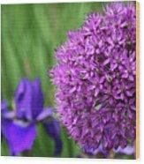 Purple Cotton Ball Wood Print